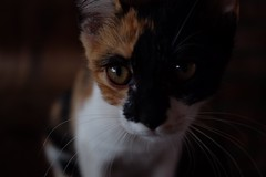 個性極差的喵喵叫 (Lin-CL) Tags: fujifilm carlzeissjena 35mmf24 xt1 flektogonmc