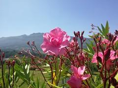 Sol y calor en oñati (eitb.eus) Tags: eitbcom 30864 g1 tiemponaturaleza tiempon2019 verano gipuzkoa oñati koldomedrano