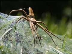 Centre araignée