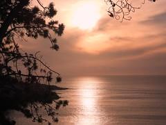 9714ex La Jolla sunset (jjjj56cp) Tags: sunset coast coastline coastalsunset westcoast california ca lajolla lajollacove dusk silhouette tree pinetree falconsilhouette ocean calm serene orange peach smooth p1000 coolpixp1000 nikoncoolpixp1000 jennypansing
