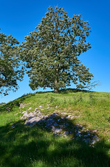 Crow Hill (scottprice16) Tags: england lancashire worston hill crowhill outdoors walking leisure tree limestone rock grass summer 2019 june leica leicaxvario sky blue green shadow shade light