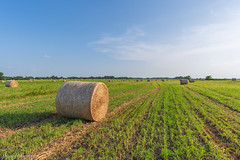 Just some hay (Jason Frels) Tags: balnghay farming field hay haybales hayfield hayrolls landscape landscapephotography makinghay pasture
