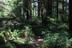 Trail shot (rozoneill) Tags: mckenzie river national recreation trail bridge deer scott boulder willamette forest belknap springs oregon hiking creek