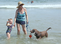 I've got my hands full (Judecat (Sand between my toes )) Tags: dog canine silverlabradorretriever retriever labradorretriever pearl love family granddaughter chloe ocean sea waves beach me judy mimi wildwood newjersey