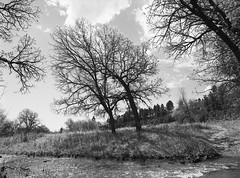 Flynn Creek - Black Hills National Forest (LarsHolte) Tags: pentax 645 pentax645 645n 6x45 smcpentaxa 35mm f35 120 film 120film analog analogue kosmo foto mono 100iso mediumformat blackandwhite classicblackwhite bw monochrome filmforever filmphotography d76 ishootfilm larsholte homeprocessing usa blackhills nationalforest stream creek trees landscape