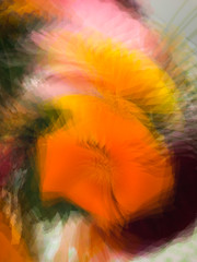 Flowers in a vase (judy dean) Tags: judydean 2019 avgcampro multipleexposure iphone orange flowers californianpoppy