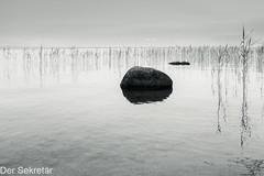 Ein Sonntagmorgen am Neuenburgersee --- A Sunday morning at Lake Neuchâtel (der Sekretär) Tags: fels felsen himmel lacdeneuchâtel lakeneuchâtel morgen neuenburgersee schilf schweiz see spiegelung switzerland wasser gespiegel lasuisse lake mirrored morning reed reeds reflected reflection rock sky water
