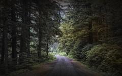 Rain Forest - Alaska (JLS Photography - Alaska) Tags: alaska alaskalandscape landscape lastfrontier landscapes forest woods trees rainforest jlsphotographyalaska hainesalaska beautifulscenery wilderness nature