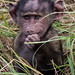 Two Week Old Baby Baboon, Maasai Mara