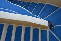 Santorini Cat (HWHawerkamp) Tags: greece santorini oia stairs curves blue cats travel
