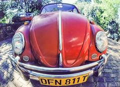 1980 nikki's beetle,65 (francois f swanepoel) Tags: red people bug icons nikki retro vehicles motorbike 1980 vwbeetle mense canonfisheye donotbugme 1958 vw 1100cc boxer donkiefoknie