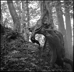 sie sind immer und überall (jo.sa.) Tags: baum bw wald lebensraum mittelformat schwarzweiss analog analogefotografie rollfilm rodinal