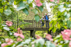 It's over there (Maisiebeth) Tags: bodnant gardens nationaltrust nt llandudno wales northwales bridge shrubbery plants waterfall