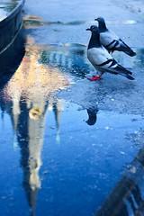 Vinave d'île (Liège 2019) (LiveFromLiege) Tags: liège luik wallonie belgique architecture liege lüttich liegi lieja belgium europe city visitezliège visitliege urban belgien belgie belgio リエージュ льеж 50mm