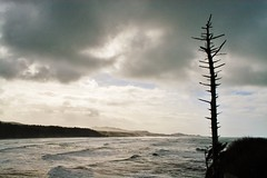 Snag: Coastal sentinal (Lostinplace) Tags: tree snag ocean oregon surf landscape monochrome blackwhite