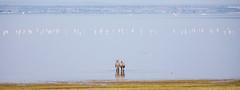 Lake Manyara, Tanzania (Markus Hill) Tags: africa travel lake bird nature animal canon tanzania see safari zebra afrika arusha tier manyara tansania 2019