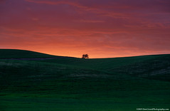 20190610 Id Palouse-0264 (Dan_Girard_Photography) Tags: 2019 dangirardphotography idaho washington sunset tree silhouette palouse thepalouse hills minimal summer