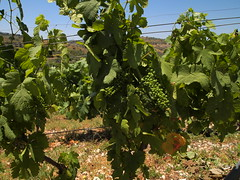 Ixsir Winery (Le monde aux yeux d'une Canadienne) Tags: ixsirwinery winetour sustainable lebanon liban may 2019 spring printemps mai