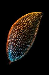 The Thing (Saul G.) Tags: macro micro macrolife macrophotography macroworld microscope nikon d7200 optiphot condenser closeup rheinberg oblique polarisation