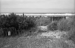 Beach Access (sicsnewton) Tags: beach tide ocean surf oregon
