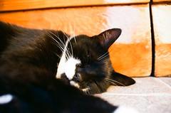 (2) il sonno (michele.palombi) Tags: grazieadioc'èancoralapellicola c41 colortec negativocolore kodakektar100 film35mm analogicshot bigsleep tuscany pienza