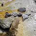 Geyserite rubble from a violent September 2018 eruption of Ear Spring (morning, 2 June 2019) 1