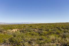 Sierra Larga (rschnaible) Tags: texas usa desert big bend national park outdoors landscape dagger flats sierra larga mountains flat
