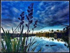 Marshlands (cjhall.nz) Tags: newzealand landscape tokina1120 650d canon morning flax reflection lake pond dramaticsky bluesky wideangle westauckland peninsula teatatu marshlands