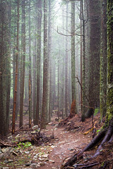 Winding Wooded Trail (s.d.sea) Tags: landscape trailscape trail trails winding woods forest fog dead spooky creepy mood moody path trees tree stumps trunks pentax k1ii hiking hike mountain mountains weekend summer pnw pacificnorthwest washington washingtonstate wa north bend outdoors explore