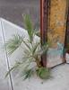 Tough Palm (mikecogh) Tags: findon stobiepole telegraphpole tough hardy concrete palm footpath pavement