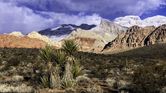 02469376422553-113-19-06-Winter's Day in Red Rock Canyon-2 (You have failed me for the last time Jim) Tags: 2019 america blm february mojavedesert nationalpark nevada places redrock usa canon earth landscape nature nearlasvegas sky winter