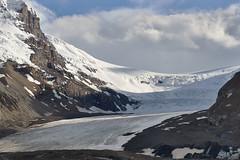 Athabaska glacier 2016_742 (Archie Richardson) Tags: columbiaicefield alberta mtathabasca athabascaglacier