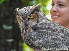 DSCN6041 (j.s. clark) Tags: alabama auburn raptors birds owl greathornedowl