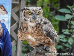 DSCN6057 (j.s. clark) Tags: alabama auburn raptors birds owl greathornedowl