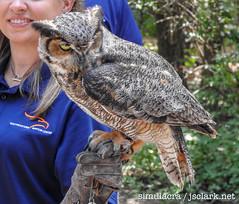 DSCN6044 (j.s. clark) Tags: alabama auburn raptors birds owl greathornedowl