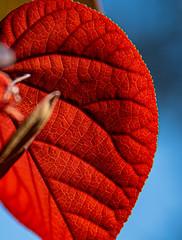 Morning Light (Vanda Francke) Tags: foliage leaves flowers hibiscus leaf nikon