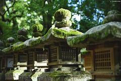 奈良・春日大社 ∣Kasuga Grand Shrine・Nara city (Iyhon Chiu) Tags: 日本 奈良 春日大社 神社 kasuga shrine nara japan japanese temple