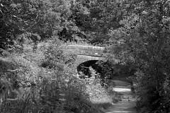 SevenBridge (Tony Tooth) Tags: nikon d7100 sigma 70mm bridge canal caldoncanal countryside path pathway towpath bw blackandwhite monochrome longsdon staffs staffordshire