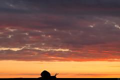 Slow Life (Slav.Burn) Tags: sky snail sunset slow life pentaxart clouds nature dusk elitegalleryaoi bestcapturesaoi
