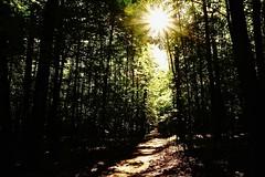 Morning in the forest (prokhorov.victor) Tags: утро свет природа солнце лес пейзаж деревья
