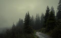 Indefinite Future (Netsrak) Tags: alpen baum bäume europa kleinwalsertal landschaft natur nebel schnee wald fog mist trees