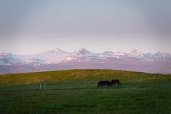 Midnight (gibwheels) Tags: iceland hotel laekur mountains range glacier icelandic horses midnight sun night daylight nikon travel summer