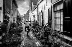 Elburg (fredbervoets.com) Tags: toeristische smeesteeg sfeervol histiorische gezellig fietser bloemenbakken bewoner attractie woningen vestingstad verkeer typisch trekpleister toeristisch straatbeeld stadsgezicht stadsbeeld smal sfeer planten huizen holland historisch geschiedenis gelderland fietsen fiets elburg cantha bloemen bezienswaardigheid fredbervoets streetlife historic bike hollands netherlands typical