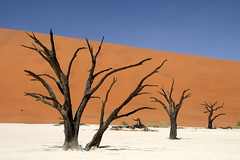 The Beauty Of Namibia (Alan1954) Tags: deadvlei nature namibia holiday 2018 desert africa platinumpeaceaward platinumheartaward