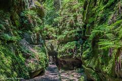 Hiking trail in a gorge (Petra Schneider photography) Tags: elbsandsteingebirge elbesandstonemoutains gorge hikingtrail ferns fern beautifulforest schlucht wanderweg farn farne wunderwald felsentor uttewaldergrund
