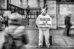 Are you living your life... (Wendy G Davies) Tags: street rabbit white manualfocus mono blackandwhite longexposure urban sign banner candid london monochrome