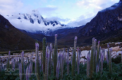 Les Fleurs des Montagnes (Dr. Ernst Strasser) Tags: ifttt 500px cordillera blanca huarraz julien vidal landscape montagne mountain paisaje paysage pentax k5 peru trek de santa cruz unesco montaña pérou montaòa pèrou ernst strasser unternehmen startups entrepreneurs unternehmertum strategie investment shareholding mergers acquisitions transaktionen fusionen unternehmenskäufe fremdfinanzierte übernahmen outsourcing unternehmenskooperationen unternehmensberater corporate finance strategic management betriebsübergabe betriebsnachfolge cordillerablanca julienvidal pentaxk5 trekdesantacruz