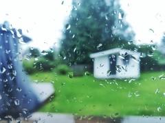 Midsommer day (zoran.ziza) Tags: oneplus oneplus6 shotononeplus macro smartphone cameraphone photography rain raindrops