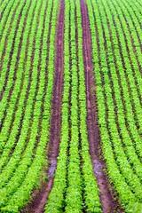 Lines on the Hill (Julian Barker) Tags: oxron a614 nottinghamshire east midlands england uk great britain europe agriculture farm farming crop crops plants lines rows symmetry season seasonal arable hill canon dslr 5d mkii julian barker