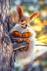 Солнышко) (marussia1205) Tags: белочка белка солнышко милота улыбка sun squirrel cute smile
